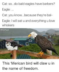 Freedom Eagle Meme - cat sodo bald eagles have barbers eagle cat you knowbecause they re