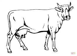 cow coloring pages cattle coloring pages free coloring pages to