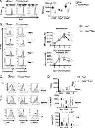 pten loss in cd4 t cells enhances their helper function but does