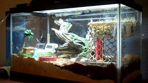 Crab Decorations For Home How To Make A Hermit Crab Habitat 5 Steps