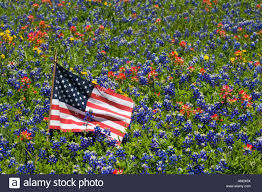 Country American Flag American Flag In Field Of Blue Bonnets Paintbrush Texas Hill