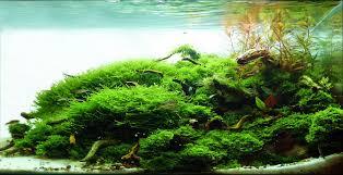 208 best aquascaping images on pinterest aquascaping aquarium