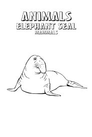mammals coloring pages elephant seal animal mammals coloring page coloring sky