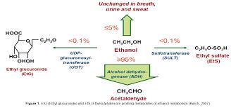 etg test time table assessment of alcohol exposure testing for ethylglucuronide etg