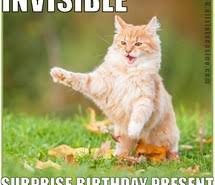 Invisible Cat Memes - invisible cat meme images on favim com