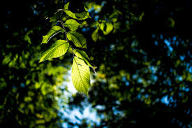 free images tree nature forest branch light night sunlight