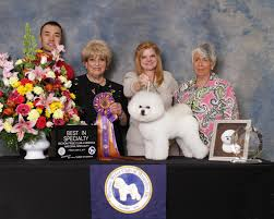 bichon frise names male bichon frise club of america u2013 member of american kennel club
