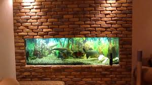 wall aquarium my in wall fish tank phase 1 of 2 youtube