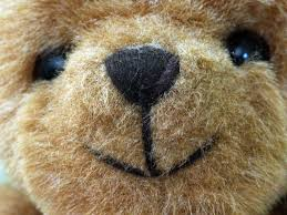 teddy bear face free stock photo public domain pictures