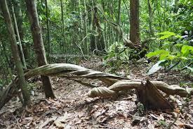 tawau hills park sabah malaysia borneo tourist attraction