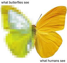 How Do Blind People See Insect Vision Asu Ask A Biologist