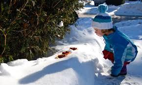 10 books about backyard wildlife in winter delightful children u0027s