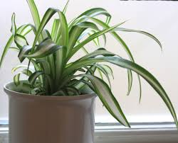 house plants are good for you growing nicely