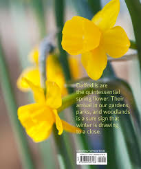 daffodil the remarkable story of the world u0027s most popular spring