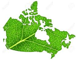 macro of a green leaf cut out in the shape of canada stock photo