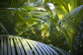 free image of tropical rainforest
