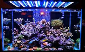 Understanding Marine Aquarium Lighting Home Aquaria