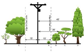 tree trimming tcec