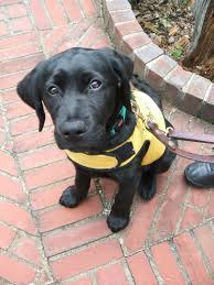 resolve to raise a puppy and change a life