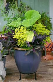 Tropical Potted Plants Outdoor - 204 best container gardening images on pinterest gardening