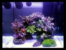 Floating Aquascape Reef2reef Saltwater And Reef Aquarium Forum - 70 best reef tank images on pinterest saltwater aquarium reef