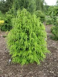 native plants of long island shade trees nursery
