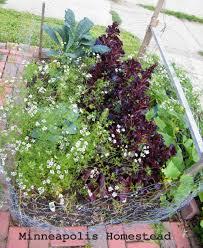 100 garden plants july bbc earth lots of corpse flowers