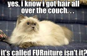 Clean Cat Memes - meme furniture