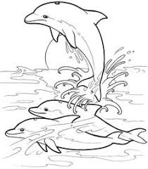 dolphin coloring dolphin images free printable dolphin mammals
