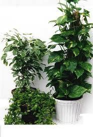 green plants green plants swenson silacci flowers