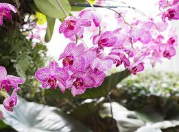 go inside the gorgeous orchid show at the new york botanical