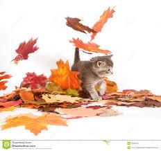 fall pumpkin wallpaper fall pumpkin wallpaper smokescreen