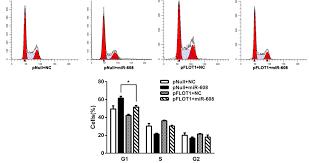 microrna 608 inhibits proliferation of bladder cancer via akt