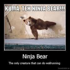Running Bear Meme - ninja bear demotivation us