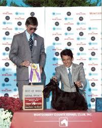 dog show 2010 12 26