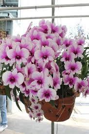 Amazing Flower Arrangements - 197 best květiny images on pinterest flowers plants and pretty