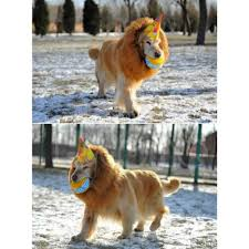 online buy wholesale halloween costumes dogs from china halloween