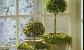 video indoor herb plants martha stewart