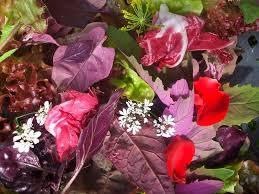 organic edible flowers 97 best roses maddocks farm organics growing using organic
