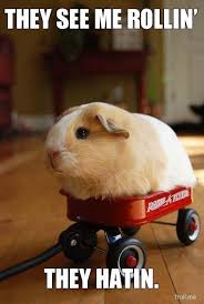 Funny Animal Meme Pictures - bunny say they see me rollin funny animal meme picture