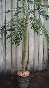 how to make a palm tree out of pvc pipe pvc pipe pipes and palm