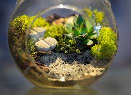 everything you need to know about making terrarium quiet corner