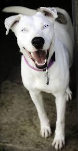 deaf pets make wonderful pets too leesburg vet blog