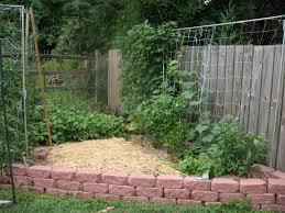 rockvilleedibles adventures in suburban gardening