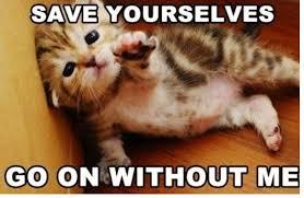 Cute Kitty Memes - cute cats memes