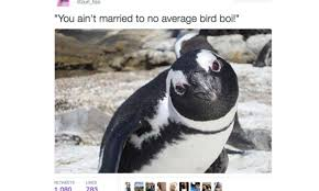 Penguin Memes - hilarious memes and tweets twitter is losing it over heartbreaking