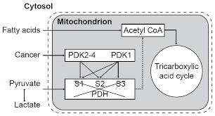 pharmaceuticals free full text mitochondrial dysfunction and