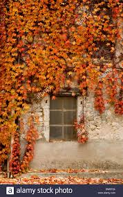 autumn creeper framing a window on old house in france stock photo