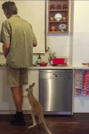 Chris Brolga Barnes This Cute Baby Kangaroo Is So Excited For His Treat And We Can U0027t