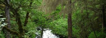 forests november 2017 browse articles forestry degree programs certificates bachelors masters